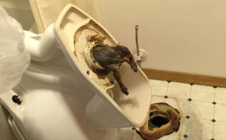 Покажи в картинках что будет если долго сидеть в туалете