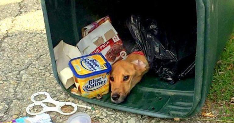 Девушка переехала жить к бойфренду и… выбросила свою собаку в мусорный бак