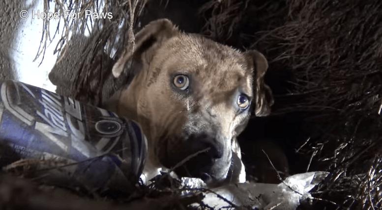 Собака целовала каждого щенка, которого забирали люди